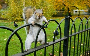 squirrel_fance